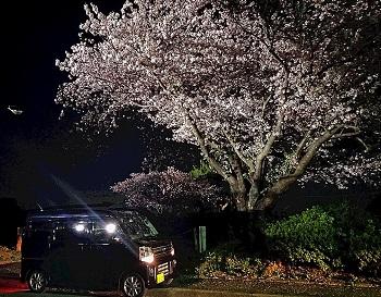 夜桜01.JPG
